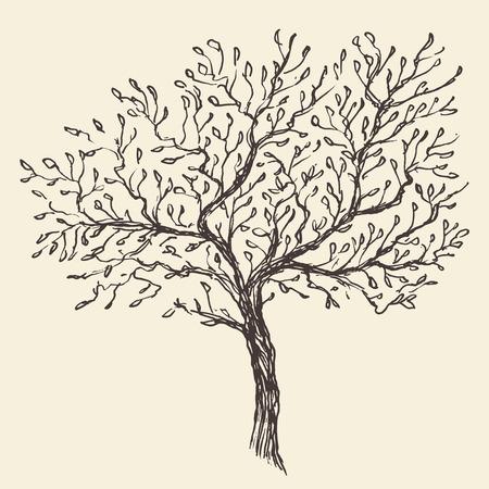 Vintage olive engraved background Hand drawn illustration Illustration