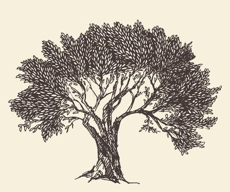 arte greca: Vintage olive sfondo inciso Illustrazione disegnata a mano