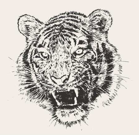 silueta tigre: Boceto dibujado Tiger grabado cabeza ilustración vectorial mano Vectores