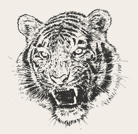 tiger isolated: Tiger head engraving vector illustration hand drawn sketch