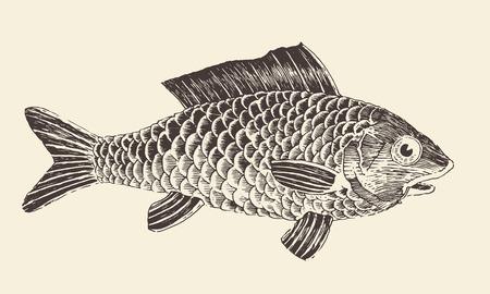 bream: Fish Bream vintage engraved vector illustration, hand drawn