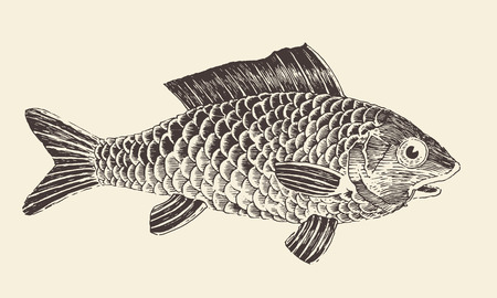 Fish Bream vintage engraved vector illustration, hand drawn