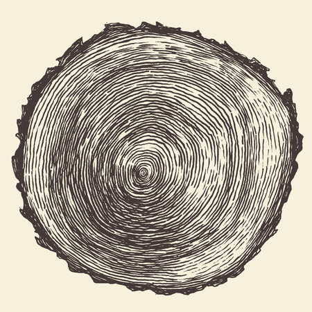 Tree rings engraved background Annual tree saw cut tree trunk vector illustration hand drawn Stock Illustratie