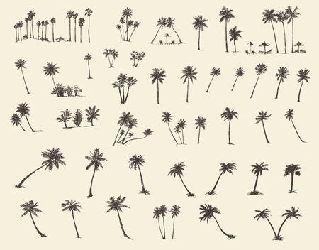 arbol: Vector ilustraciones siluetas de palmeras dibujado a mano boceto cuarenta piezas