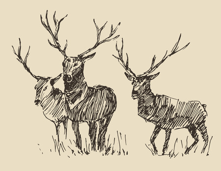 deer hunting: Deer engraving style, vintage illustration, hand drawn