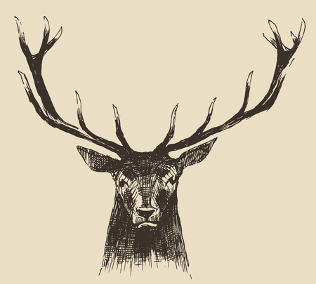 deer hunting: Deer head engraving style, vintage illustration, hand drawn