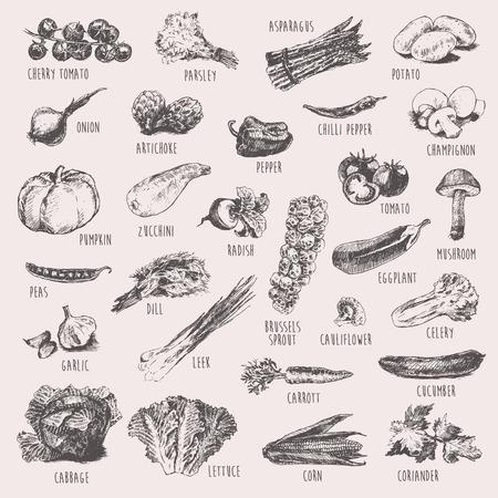 legumes: Collection des croquis dessin�s � la main des l�gumes grav� de style d'illustration de vecteur d�taill�e haute
