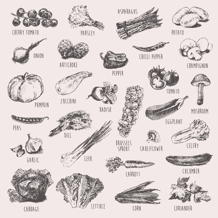 Collection of hand drawn vegetables high detailed vector illustration sketch engraved style Ilustracja