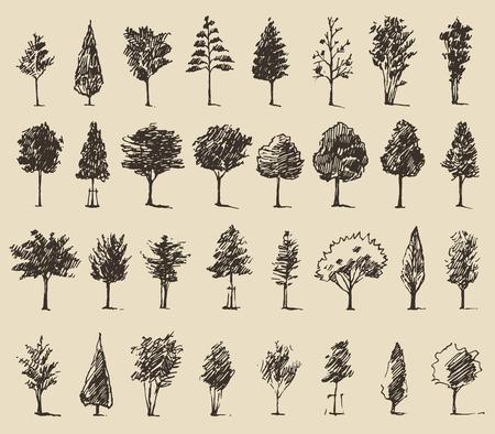 나무 스케치 세트, 빈티지 벡터 일러스트 레이 션, 새겨진 스타일, 손으로 그린