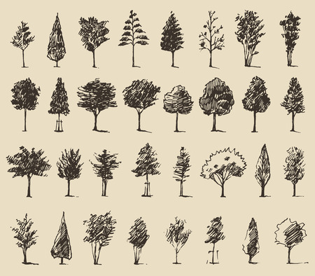 branch silhouette: Trees sketch set, vintage vector illustration, engraved style, hand drawn