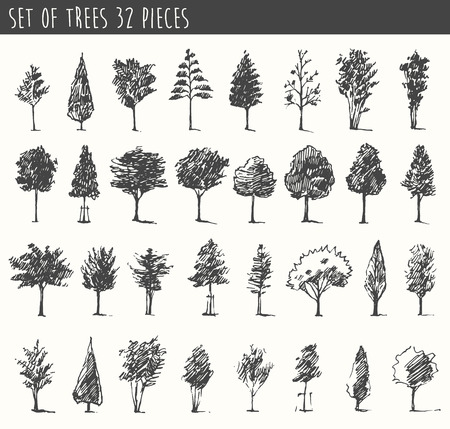 Trees sketch set, vintage vector illustration, engraved style, hand drawn