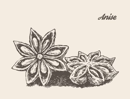 spice: Anise isolated on background vintage vector illustration hand drawn engraved style sketch Illustration