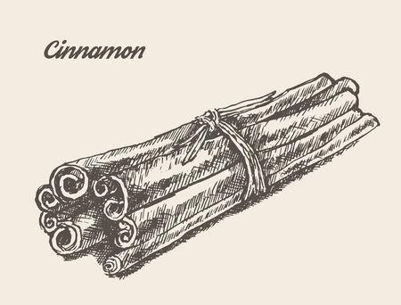 cinnamon bark: Cinnamon isolated on background vintage vector illustration hand drawn engraved style sketch Illustration