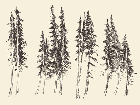 tirol: Fir forest engraving vector illustration hand drawn sketch
