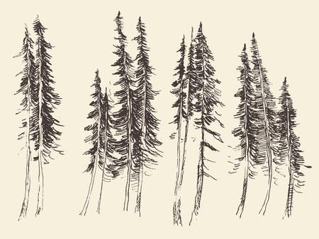 tirol: Fir forest engraving vector illustration hand drawn sketch