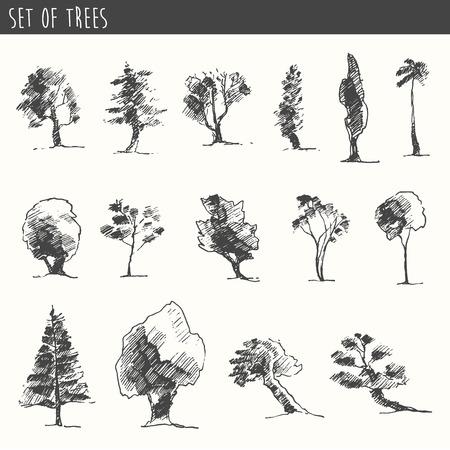 boceto: Árboles conjunto boceto, ilustración vectorial vintage, estilo grabado, dibujado a mano Vectores