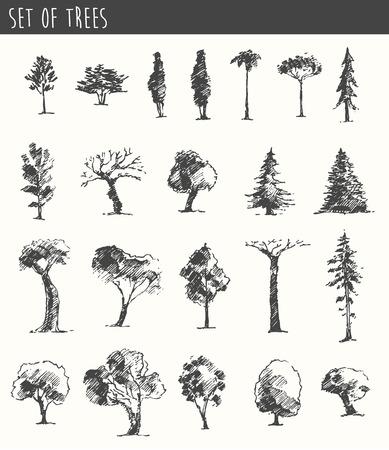 Árboles conjunto boceto, ilustración vectorial vintage, estilo grabado, dibujado a mano