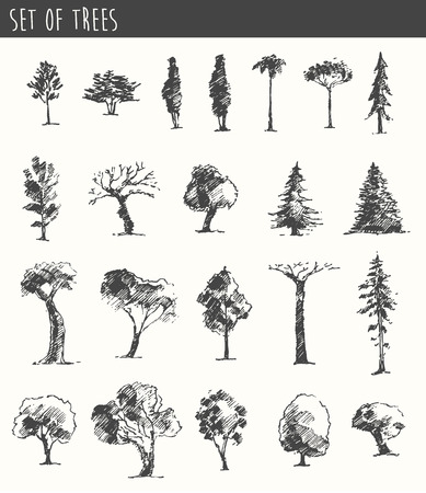 drawing trees: Trees sketch set, vintage vector illustration, engraved style, hand drawn