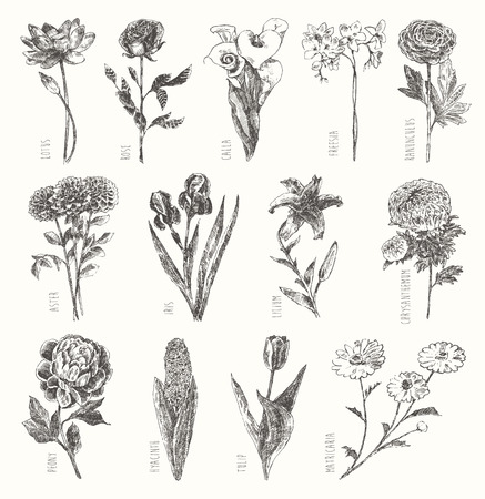 Trendy collection of beautiful hand drawn flowers, floral set collection of design elements isolated illustration on white background Illustration