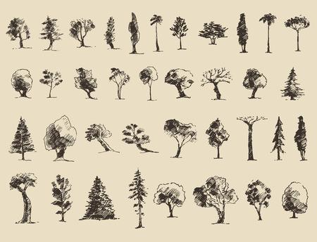 dessin au trait: Les arbres de jeu de croquis, vecteur vintage illustration, le style grav�, tir� par la main