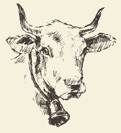 herbivore natural: Cow head with bell dutch cattle breed vintage illustration engraved retro style hand drawn sketch