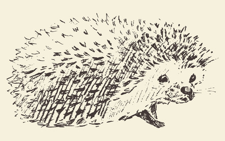 hedgehog: Hedgehog engraving style vintage illustration hand drawn sketch