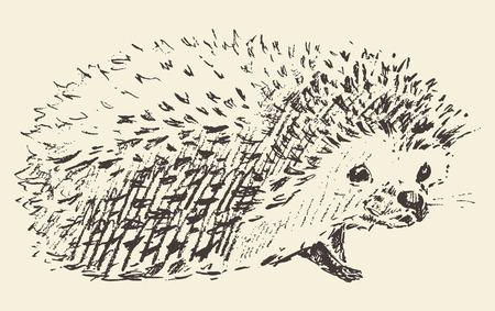 hedgehog: Hedgehog engraving style vintage illustration hand drawn sketch