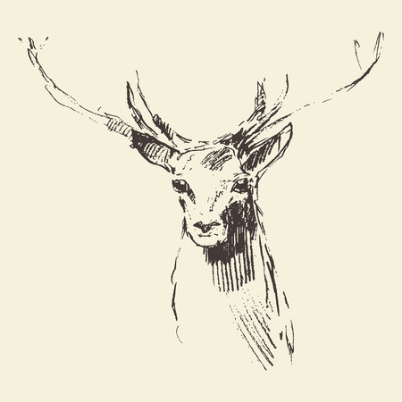 Deer engraving style vintage illustration hand drawn sketch  イラスト・ベクター素材