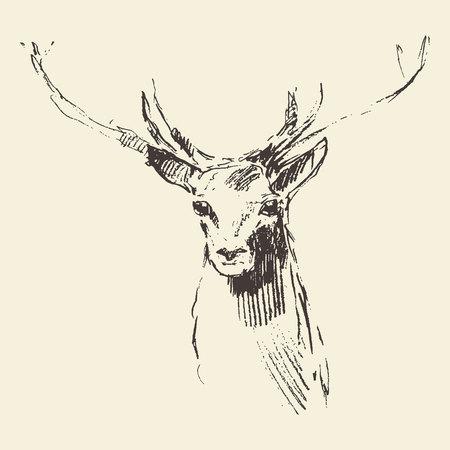 Deer engraving style vintage illustration hand drawn sketch Stock Illustratie