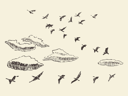 migratory birds: Hand drawn flying birds in the sky with clouds migratory birds vintage vector illustration