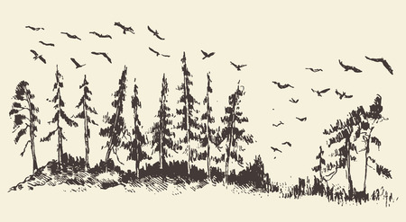 brook: Hand drawn landscape with fir forest and meadow migratory birds vintage vector illustration Illustration
