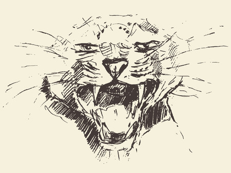 leopard head: Leopard head attacking pose engraving style vintage illustration hand drawn sketch Illustration
