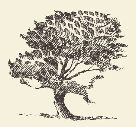 Old tree vintage illustration engraved retro style hand drawn sketch