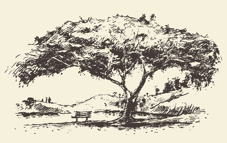 Beautiful romantic illustration of tree with bench hand drawn sketch