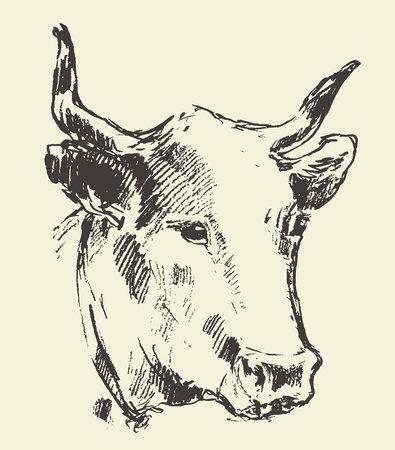 Koe hoofd met belletje nederlands koeienras uitstekende illustratie gegraveerde retro-stijl hand getekende schets