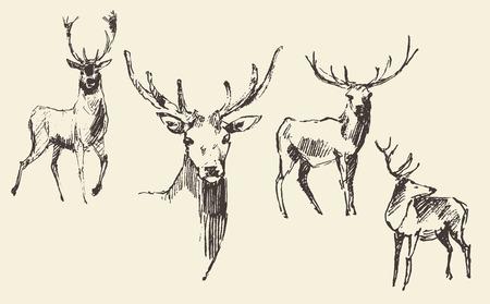 venado: Conjunto de ciervos estilo de grabado ilustraci�n de la vendimia boceto dibujado a mano