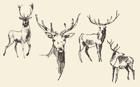 deer hunting: Set of deers engraving style vintage illustration hand drawn sketch