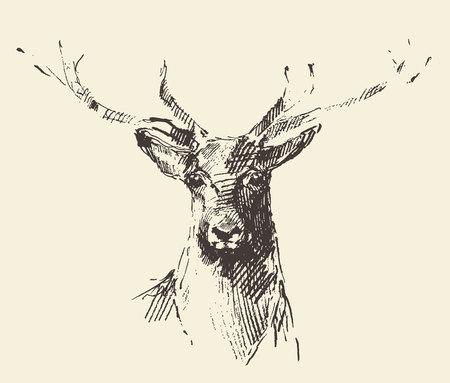 venado: Cosecha ilustración boceto dibujado a mano el estilo de grabado de los ciervos Vectores