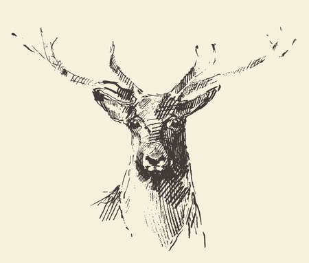 lithograph: Deer engraving style vintage illustration hand drawn sketch Illustration