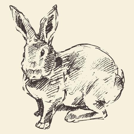 lapin sur fond blanc: Lapin, style de gravure illustration vintage dessinés à la main croquis
