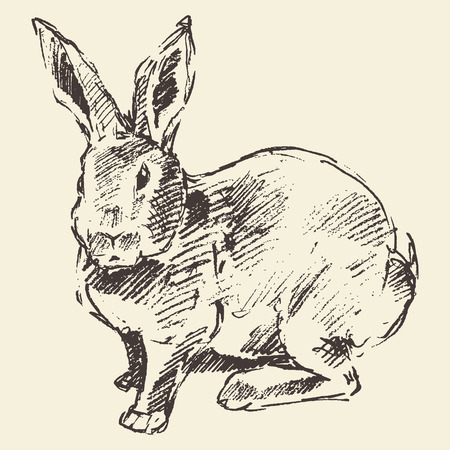 bunny rabbit: Rabbit, engraving style vintage illustration hand drawn sketch