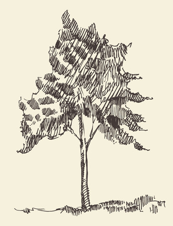 young leaves: Young tree vintage illustration engraved retro style hand drawn sketch Illustration