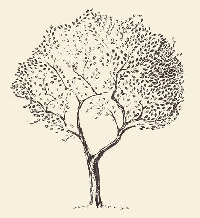 albero da frutto: Schizzo disegnato Giovane ulivo illustrazione vettoriale mano