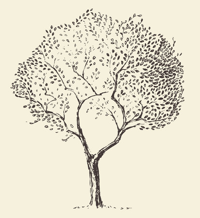 fruit tree: Young olive tree illustration vector hand drawn sketch
