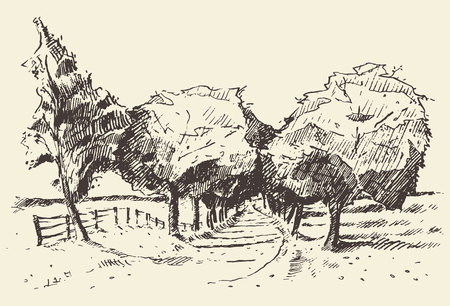 ink drawing: Hand drawn landscape with trees and meadow vintage vector illustration Illustration