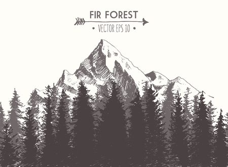 Fir forest background with contours of the mountains hand drawn vector illustration