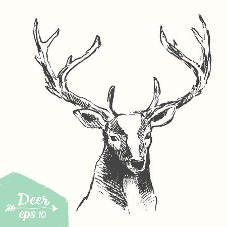 hart: Sketch of a deer head, vintage illustration, hand drawn, sketch Illustration