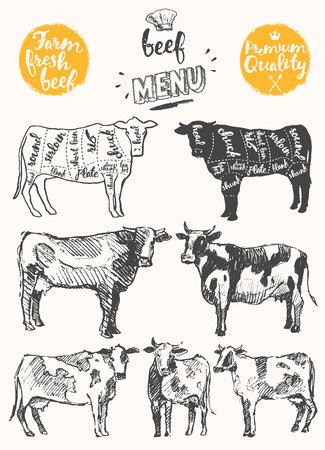 esquema: Modelo del menú del restaurante de la carne de la vendimia. esquema estadounidense de carne de vacuno