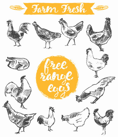 hand free: Set of a hand drawn chickens, label for a free range chicken and eggs, farm fresh chicken meat,  illustration