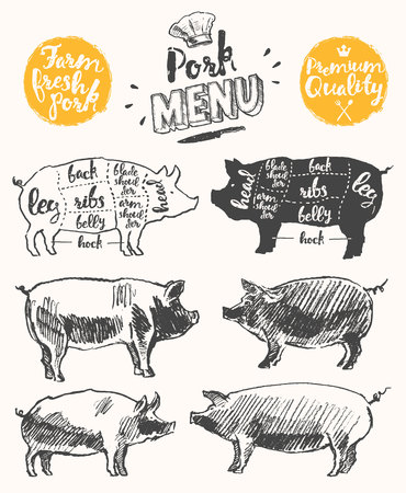 pork chop: Vintage restaurant meat menu template American scheme of pork cuts hand drawn illustration Illustration